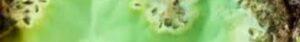 gemstone-line-peridot